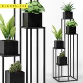 plants 238