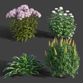 Garden Plants set 01