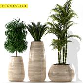 Plants 244