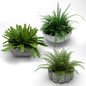 plants in flower pots, plants in flower pots 002
