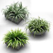 plants in flower pots, plants in flower pots 001