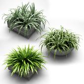 plants in flower pots, растения в кашпо 001