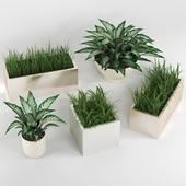Комнатные растения: набор растений в горшках