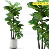 Plants 245