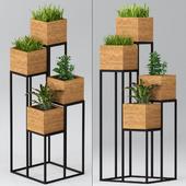 Комнатные растения: полка с растениями