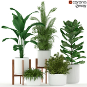 Plants collection 194
