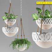 Plants 246