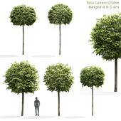 Липа Грин Глоб | Tilia Green Globe #1(4.9-5.4m)