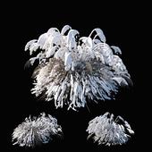 Miscanthus sinensis winter model