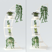 Полка с растениями