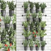Vertical gardening. 34