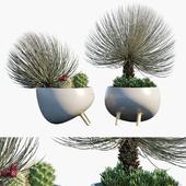 Plant in pots # 27: Desert mood