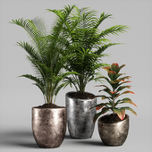 plants set 09