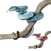 Голубая островная гадюка
