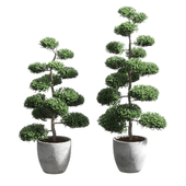 Bonsai with spherical branches. 2 models