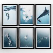 Постеры: кит и дельфин