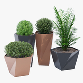 Five pot