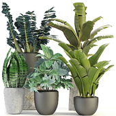 Collections Plants 03