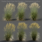 Feather Reed Grass - Calamagrostis acutiflora - High