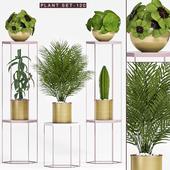 Plant set-120
