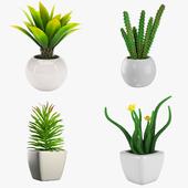 Potted Houseplants - Set 3