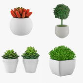 Potted Houseplants - Set 5