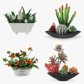 Potted Houseplants - Set 4