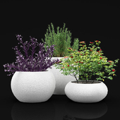 Outdoor plants in a planters