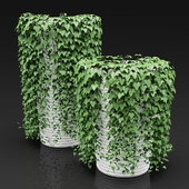 Set of a hanging down plants in a planters | Set of hanging plants in flower pots