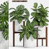 PLANT SET-119