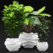 Bib plants in a planters, large plants in flower pots