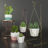 Indoor_Plants_Collection_02