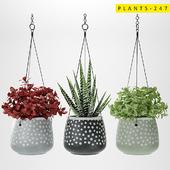 plants 247