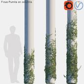 Ficus Pumila on columns #1