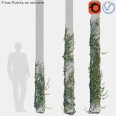Ficus Pumila on columns # 2