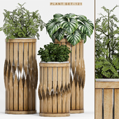 Plant set-121