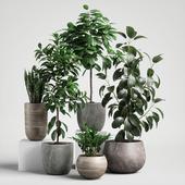 plants set 10
