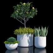 Набор растений №1