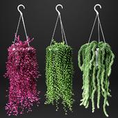 Set of hanging plants in hanging flower pots | Hanged Plants set in a hanging planters