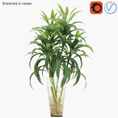 Branches in vases 22: Lucky bamboo