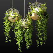 Lamps with hanging plants | The Lighters with a hanging plants