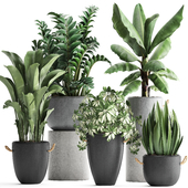Plant Collection 392.