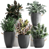 Plant Collection 393.