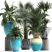 Коллекция растений 394.