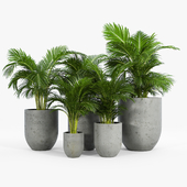 Neo planter