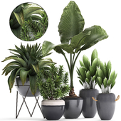 Plant Collection 395.