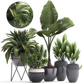 Коллекция растений 395.