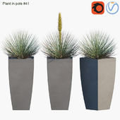 Plant in pots #41 : Agave