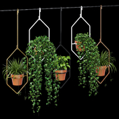 Ampelous plant