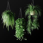 Plants in hanging wicker planters | Plants in Hanging Wicker Planters